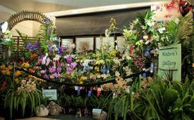 Easter Weekend Brings an Exotic Orchid Show and Sale to Austin