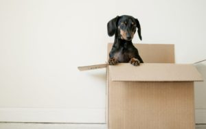 Moving With Your Dog or Cat? Here's What To Do.